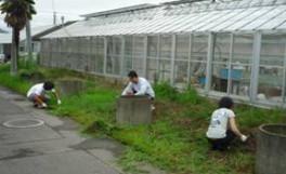 「農学部クリーンキャンパス」を実施しました(2010/07/14)