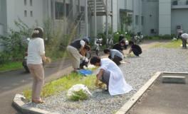 農学部クリーンキャンパス」を実施しました。(2012/07/25)